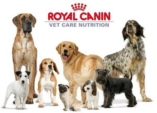 Влажные корма для собак Роял канин (Royal Canin) - корма с заботой о коже и шерсти Вашего любимца!