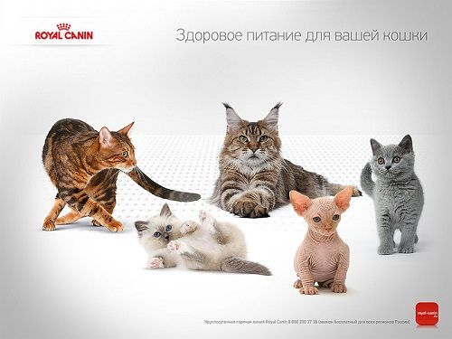 Выберите лакомство для своего питомца среди сухих кормов для кошек Роял Канин (Royal Canin)