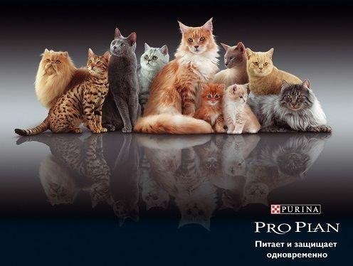Сухие корма для кошек Purina Pro Plan  – в соответствии со всеми потребностями питомца!