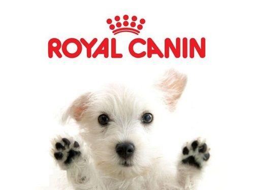 Сухие корма для собак Роял канин (Royal Canin) - Профессиональный премиум корм для Ваших питомцев!