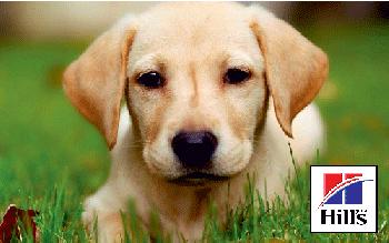 Сухие корма для собак Хиллс (Hills) – качество с многолетней историей!