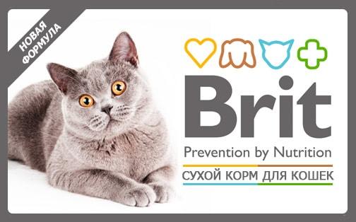 Сухие корма для кошек Брит (Brit) – защита от негативных воздействий окружающей среды!