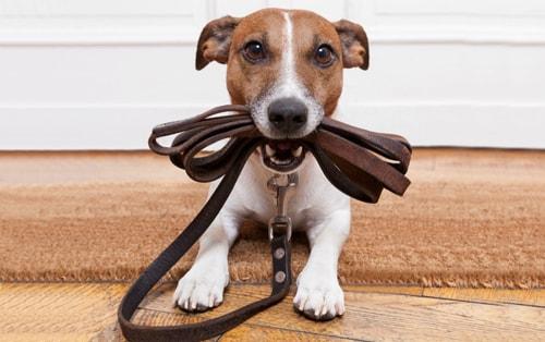 Амуниция для собак. Как выбрать?