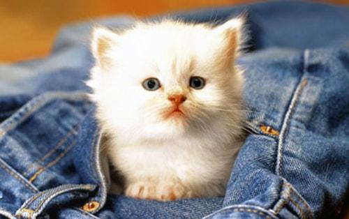 Появление котенка в вашем доме