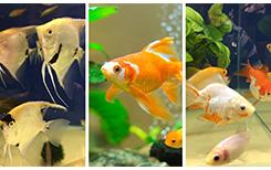 5 вопросов профессиональному аквариумисту