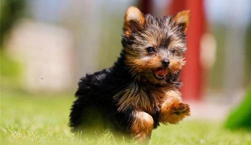Лучшие корма для собак мелких пород по версии Планеты ЗОО