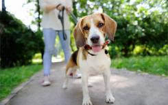 Прогулка с собакой: что взять с собой?