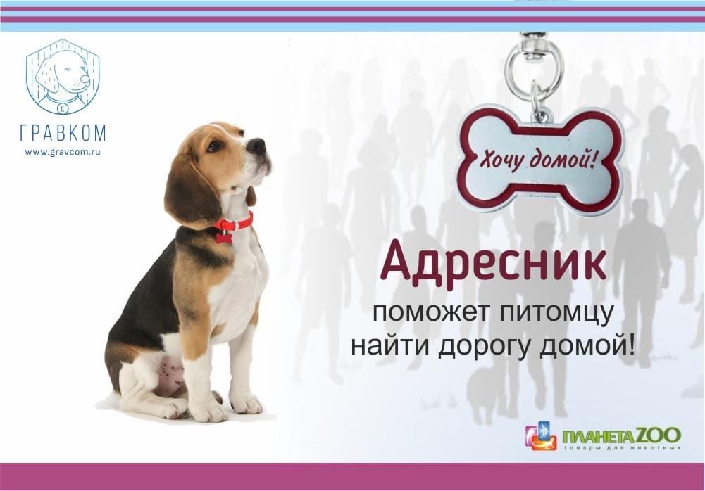 Адресник для собаки и кошки