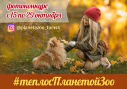 Осенний конкурс