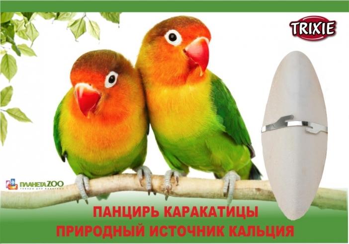 Панцирь каракатицы для попугаев!