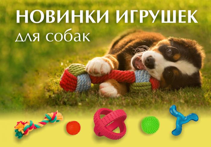 Новики игрушек для собак